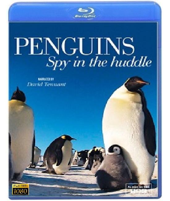 Пингвин: Шпион под прикрытием (3 серии) [Blu-ray]