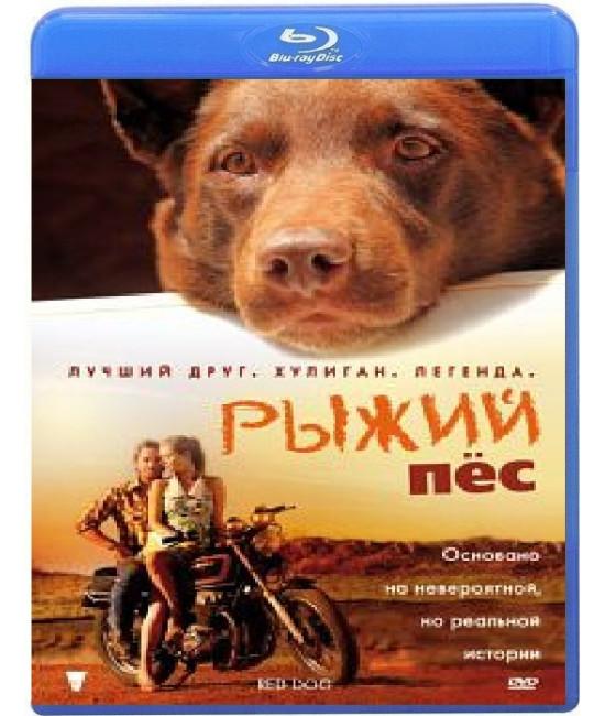 Рыжий пес [Blu-Ray]