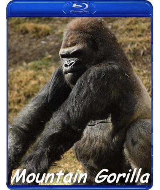 BBC: Горная горилла [Blu-Ray]