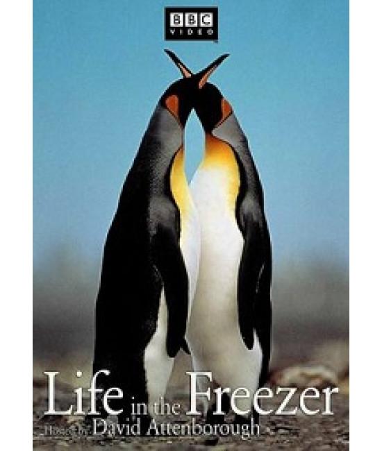 BBC: Жизнь в морозильнике [1 DVD]