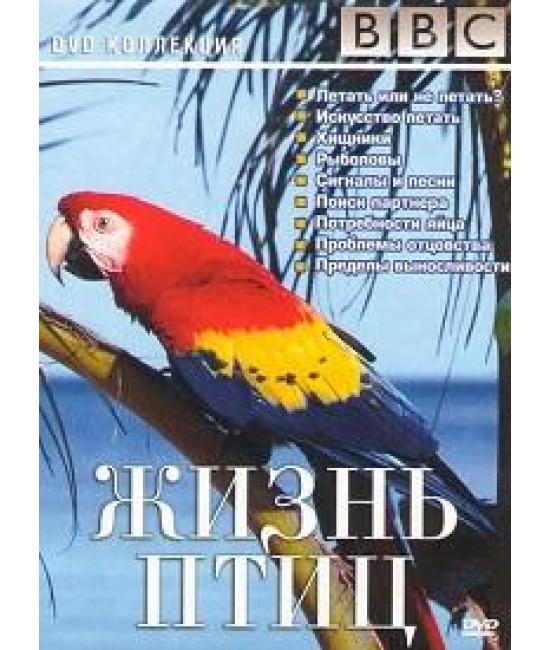 BBC Жизнь птиц [1 DVD]