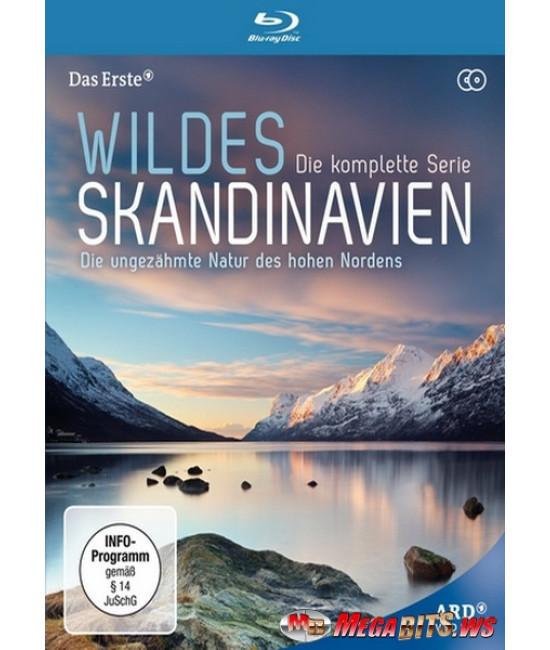 Дикая природа Скандинавии [Blu-Ray]