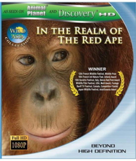 Дикая Азия: В царстве рыжей обезьяны [Blu-Ray]