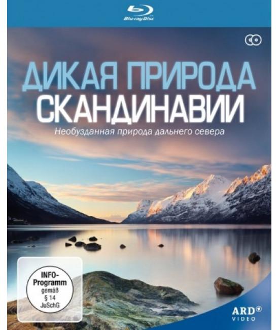 Дикая природа Скандинавии [2 Blu-ray]