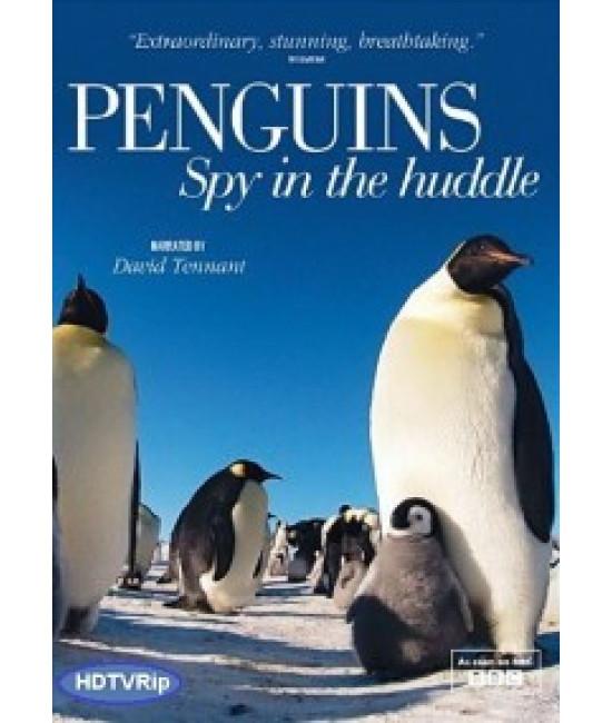 ВВС Пингвин: Шпион под прикрытием [1 DVD]