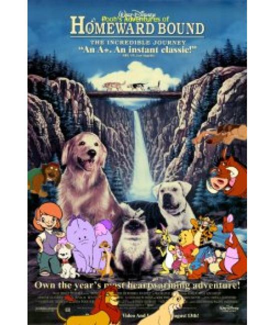 Дорога домой: Невероятное путешествие [DVD]